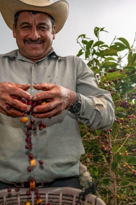 Agricultura en la economía de Guatemala – actualidad