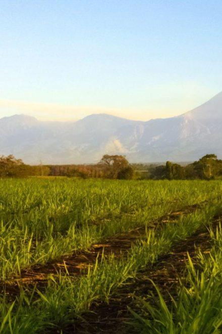 ¡Biomasa de caña de azúcar que genera electricidad!