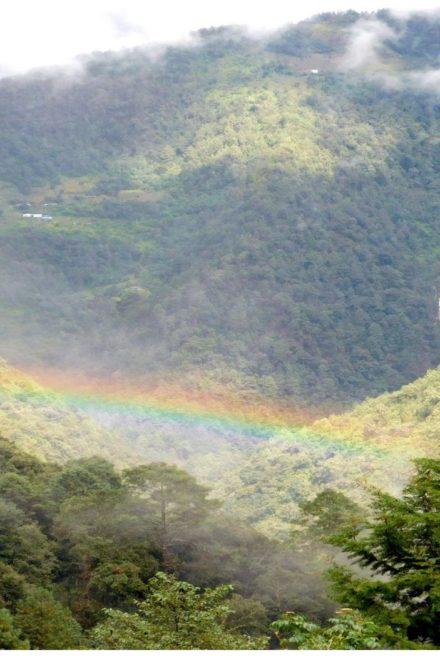 Perspectivas: Sector forestal de Guatemala 2021